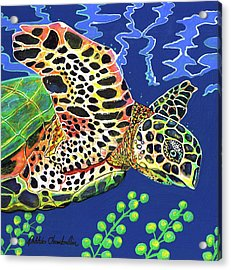 Debs Honu Acrylic Print by Debbie Chamberlin