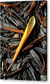 Acrylic Print featuring the digital art Decay by Julian Perry