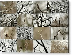 December Buds Acrylic Print
