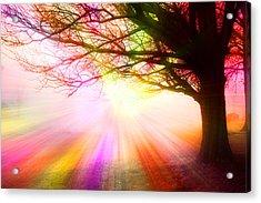 December Fog By The Sleepy Pin Oak Rainbow Burst Acrylic Print by Thomas Woolworth