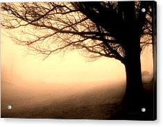 December Fog By The Sleepy Pin Oak Sepia Acrylic Print by Thomas Woolworth