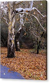 Acrylic Print featuring the photograph December In California by Viktor Savchenko