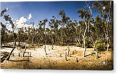 Deception Bay Conservation Park Acrylic Print by Jorgo Photography - Wall Art Gallery