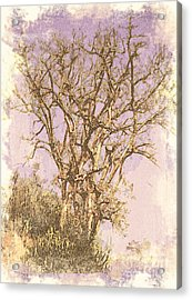 Deciduous Acrylic Print by Manjot Singh Sachdeva