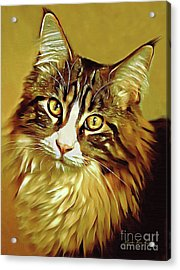 Acrylic Print featuring the digital art Decorative Digital Painting Maine Coon A71518 by Mas Art Studio