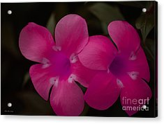 Acrylic Print featuring the photograph Decorative Floral A62917 by Mas Art Studio