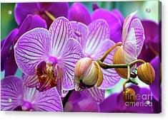 Acrylic Print featuring the photograph Decorative Fuschia Orchid Still Life by Mas Art Studio