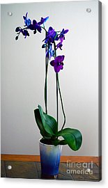 Acrylic Print featuring the photograph Decorative Orchid Photo A6517 by Mas Art Studio