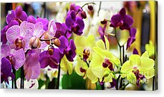 Acrylic Print featuring the photograph Decorative Orchids Still Life B82418 by Mas Art Studio