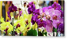 Acrylic Print featuring the photograph Decorative Orchids Still Life C82418 by Mas Art Studio
