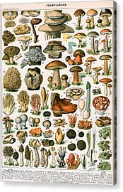 Decorative Print Of Champignons By Demoulin Acrylic Print by American School