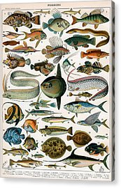 Decorative Print Of Poissons By Demoulin Acrylic Print