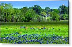Decorative Texas Homestead Bluebonnets Meadow Mixed Media Photo H32517 Acrylic Print