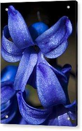 Deep Blue Flower Acrylic Print by Svetlana Sewell