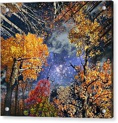 Deep Canopy Acrylic Print by Dave Martsolf