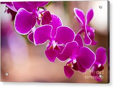 Deep Fuchsia Orchids  Acrylic Print by A New Focus Photography