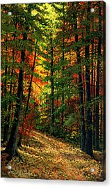 Deep In The Forest Acrylic Print by Frank Wilson