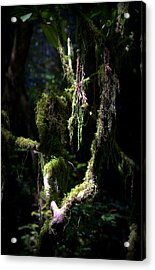 Acrylic Print featuring the photograph Deep In The Forest by Lori Seaman