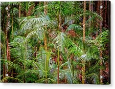 Acrylic Print featuring the photograph Deep In The Forest, Tamborine Mountain by Dave Catley