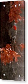 Deep In The Forest Woodpecker Acrylic Print by Debra     Vatalaro