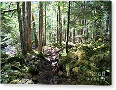Deep In The Oregon Forest Acrylic Print