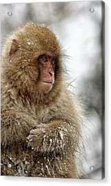 Deep In Thought Acrylic Print