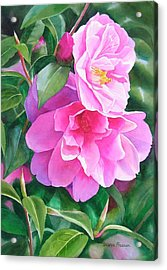 Deep Pink Camellias Acrylic Print by Sharon Freeman