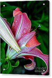 Deep Pink Lily Acrylic Print by Emilio Lovisa