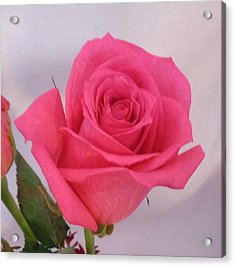 Deep Pink Rose Acrylic Print by Karen J Shine
