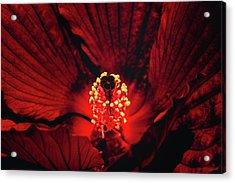 Deep Red Acrylic Print by Jae Mishra