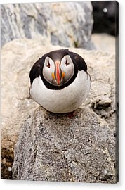 Deep Thinker Acrylic Print by Brent L Ander