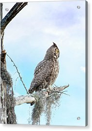 Deep Thoughts Of The Great Horned Owl Acrylic Print by Mark Andrew Thomas