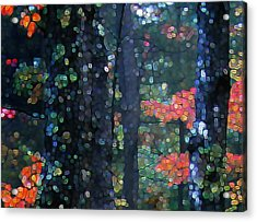 Deep Woods Mystery Acrylic Print by Dave Martsolf