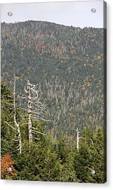 Deeper Into Forest Acrylic Print