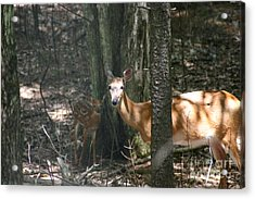 Deer And Fawn In The Woods Acrylic Print by David Bishop