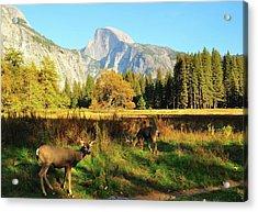 Deer And Half Dome Acrylic Print by Sandy L. Kirkner
