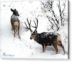 Deer And Snow 1 Acrylic Print by Marla Louise