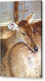 Deer Acrylic Print by Andrea Simon