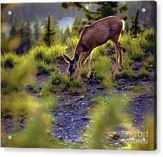 Deer At Crater Lake, Oregon Acrylic Print by John A Rodriguez
