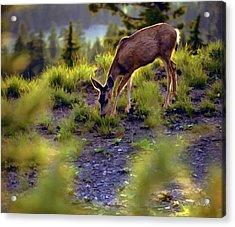 Deer At Crater Lake, Oregon Acrylic Print