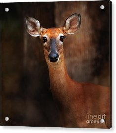 Deer At Dawn Acrylic Print