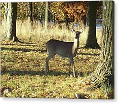 Deer At Valley Forge Acrylic Print