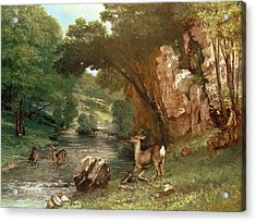 Deer By A River Acrylic Print by Gustave Courbet