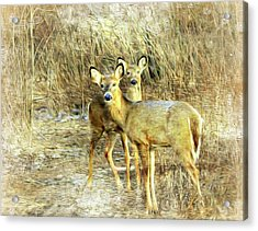 Deer Duo 6 Acrylic Print by Marty Koch
