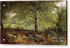 Deer In A Wood Acrylic Print
