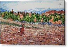 Deer In Fall Acrylic Print by Charlotte Blanchard