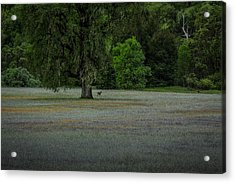 Deer In Meadow Acrylic Print