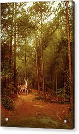 Acrylic Print featuring the photograph Deer In Morning Light by Barry Jones