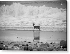 Deer In Ocean Black And White Acrylic Print