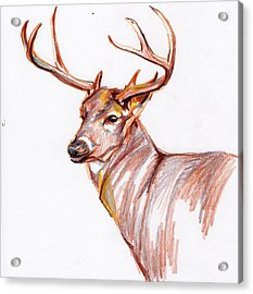Deer In Pencil Acrylic Print by Anne Seay